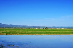 Reisfeld in Delta del der Ebro, in Katalonien, Spanien Stockbild