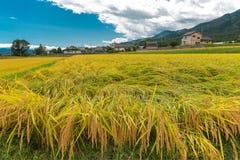 Reisfeld in der Präfektur Nagano, Japan Lizenzfreie Stockbilder