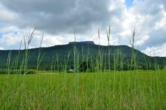 Reisfeld des Berges Stockfoto