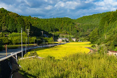 Reisfeld entlang Landstraße Präfektur Aichi, Japan Lizenzfreies Stockfoto