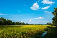 Reisfeld, Himmel und wenig Regenbogen Lizenzfreie Stockfotografie