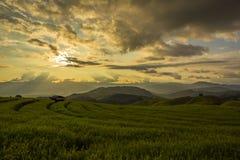 Reisfeld im Norden von Thailand Lizenzfreies Stockbild