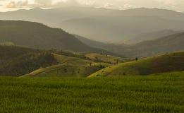 Reisfeld im Norden von Thailand Stockbilder