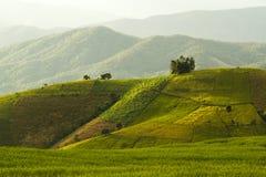 Reisfeld im Norden von Thailand Lizenzfreies Stockfoto