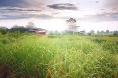 Reisfeld im Norden von Thailand Lizenzfreie Stockfotografie