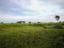 Reisfeld im Norden von Thailand Das grüne Gras wird vorbei durchgebrannt lizenzfreies stockfoto