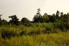 Reisfeld im Platz der das Unbekannte im Land Lizenzfreie Stockfotografie