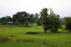 Reisfeld im Platz der das Unbekannte im Land Lizenzfreie Stockfotos