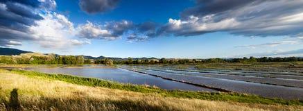 Reisfeld in Kochani, Mazedonien Lizenzfreies Stockfoto