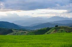 Reisfeld, ländlicher Bergblick mit schöner Landschaft Lizenzfreie Stockbilder