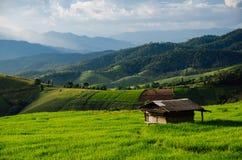 Reisfeld, ländlicher Bergblick, schöne Landschaft Stockbild