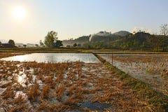 Reisfeld an Mae Chan-Stadt in Chiangrai, Thailand Lizenzfreies Stockbild
