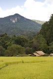 Reisfeld Mae Klang Luang im Dorf Thailand stockbild