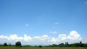Reisfeld mit blauem Himmel und weißen Wolken Stockbilder