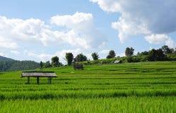 Reisfeld mit Gebirgshintergrund Stockfotografie