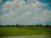 Reisfeld mit Himmel und Wolke Lizenzfreie Stockfotografie