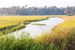 Reisfeld mit kleinem Fluss Lizenzfreies Stockfoto