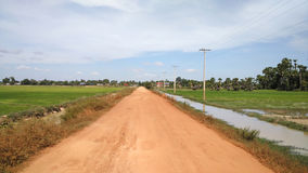 Reisfeld mit Sand-Straße Stockfotos