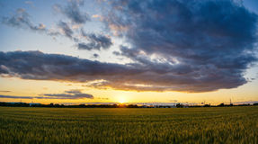 Reisfeld mit Sonnenuntergang und Wolken Stockfotografie