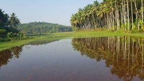 Reisfeld mit Wasser stockbild