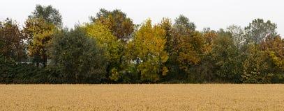 Reisfeld in Nord-Italien Stockfotografie