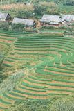Reisfeld in Sapa, Vietnam Stockfotos
