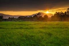 Reisfeld am Sonnenuntergang Lizenzfreie Stockbilder