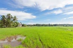 Reisfeld, Sri Lanka Lizenzfreies Stockfoto