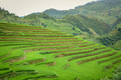 Reisfeld terassenförmig angelegt in MU Cang Chai, Vietnam stockfoto