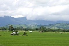Reisfeld in Thailand stockbild