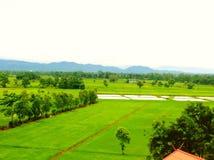 Reisfeld in Thailand Lizenzfreie Stockfotos
