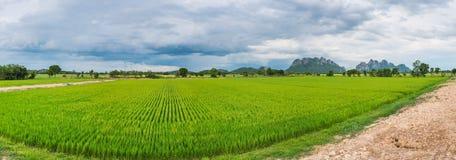 Reisfeld in Thailand-Panorama Stockbilder