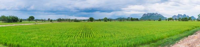 Reisfeld in Thailand-Panorama Lizenzfreie Stockfotos