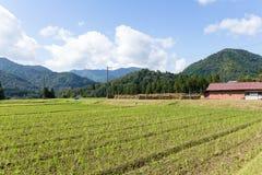 Reisfeld und -berg Stockbild