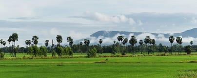 Reisfeld und -berg unter bewölktem Himmel in der Regenzeit Stockfoto
