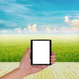 Reisfeld und blauer Himmel Lizenzfreies Stockfoto