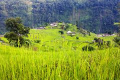 Reisfeld und -dorf in Annapurna nountains Stockbilder