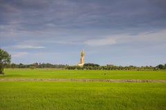 Reisfeld und wat muang großer Buddha in angthong Provinz, thaila Stockbild