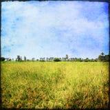 Reisfeld unter blauem Himmel Stockfotografie