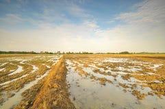 Reisfeld vorbereitet für die Wiedereinsetzung Stockfotos