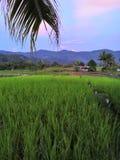 Reisfeldansicht von meinem Dorf Stockfotografie