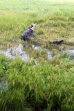Reisfelder überschwemmt nach starkem Regen Lizenzfreies Stockfoto