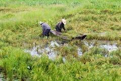 Reisfelder überschwemmt nach starkem Regen Stockfotografie
