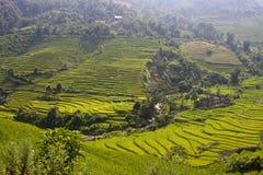 Reisfelder Lizenzfreie Stockbilder