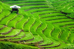 Reisfelder auf terassenförmig angelegtem Stockfotos