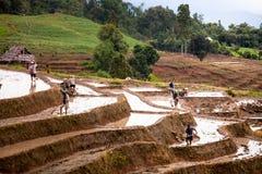 Reisfelder auf terassenförmig angelegtem Stockbilder