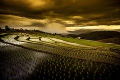 Reisfelder auf terassenförmig angelegtem Stockfotografie