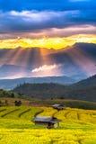 Reisfelder auf terassenförmig angelegtem Lizenzfreie Stockfotos