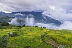 Reisfelder auf terassenförmig angelegtem lizenzfreies stockfoto