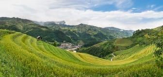Reisfelder auf terassenförmig angelegtem Stockfoto